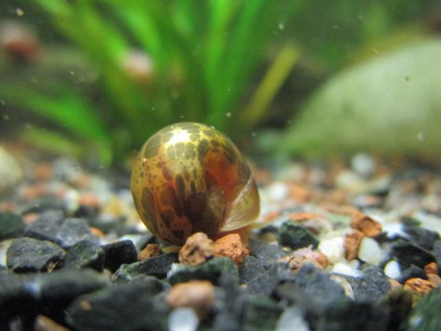 Vos escargots Img_4315