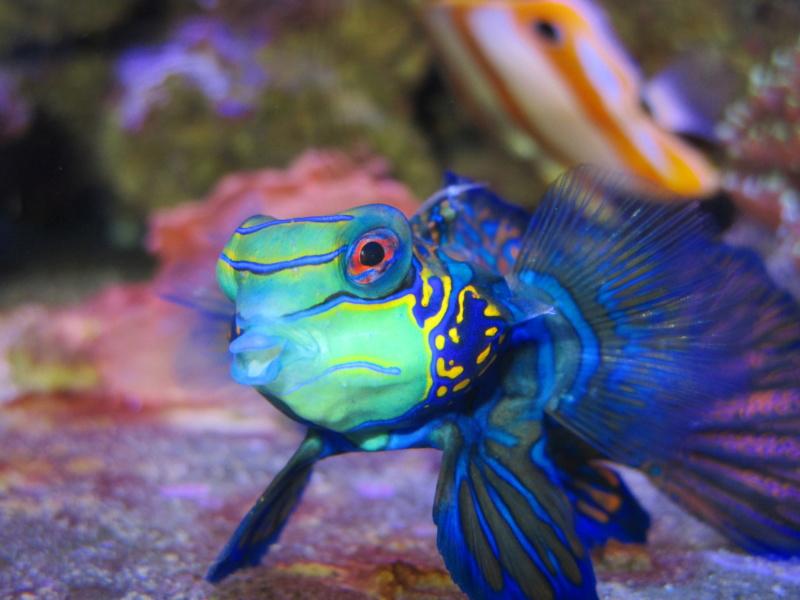 Recueil de photo aquariophiles de qualités Img_4710