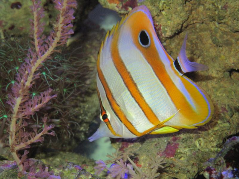 Recueil de photo aquariophiles de qualités Img_4711