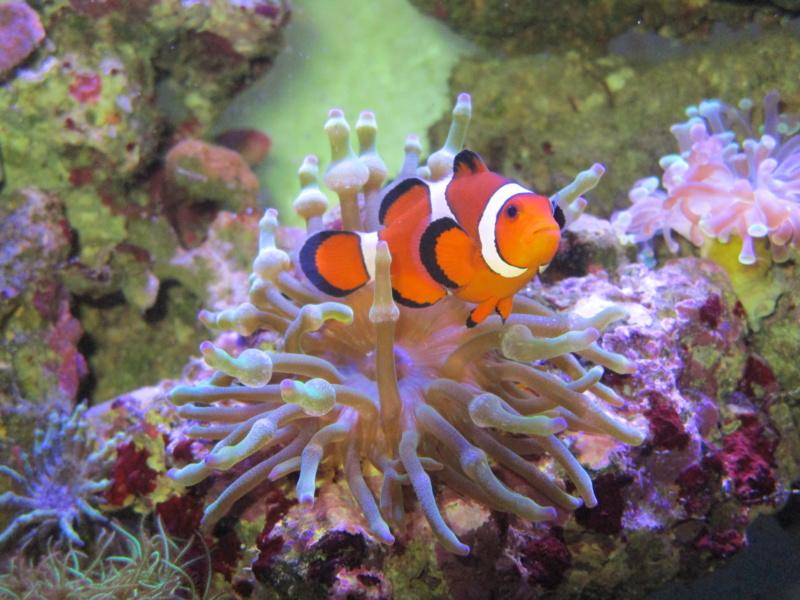 Recueil de photo aquariophiles de qualités Img_4712