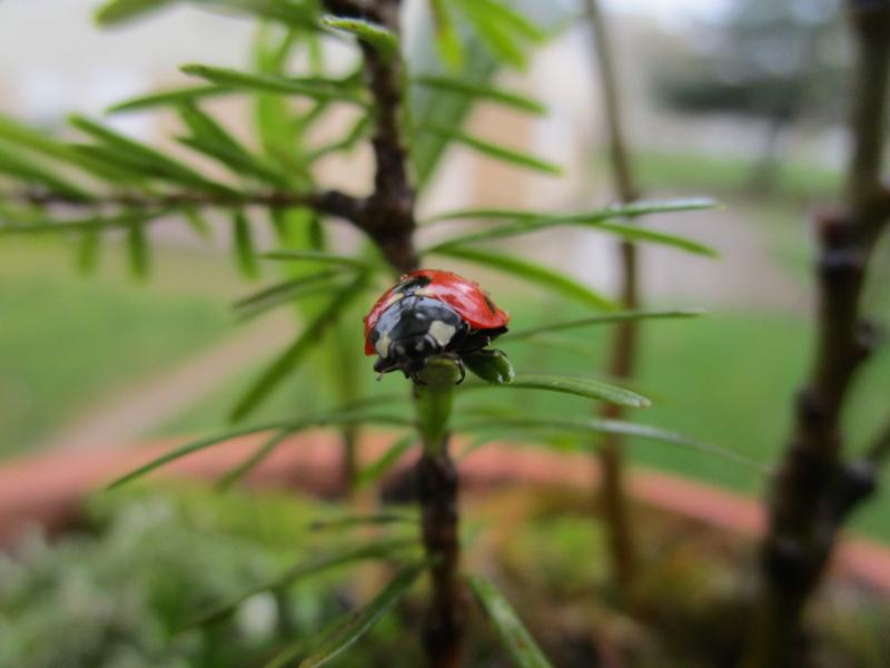 Les animaux de nos jardins Img_4910