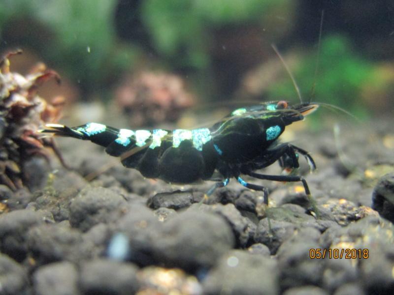 Recueil de photo aquariophiles de qualités Img_5229