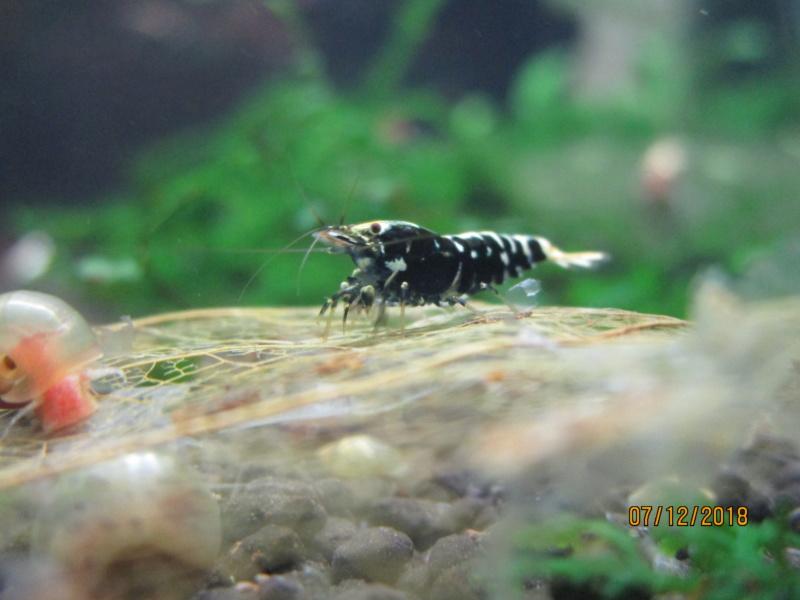 Recueil de photo aquariophiles de qualités Img_5440