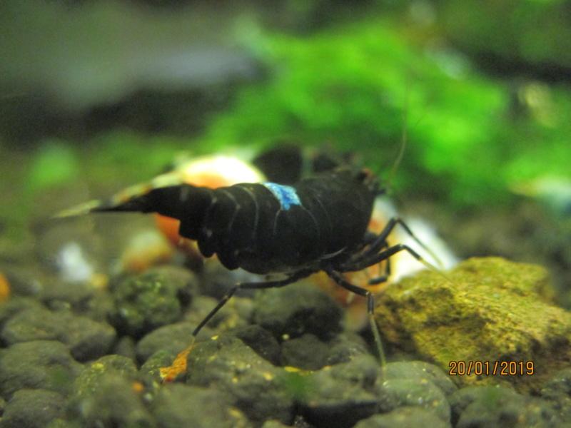 Recueil de photo aquariophiles de qualités Img_5442