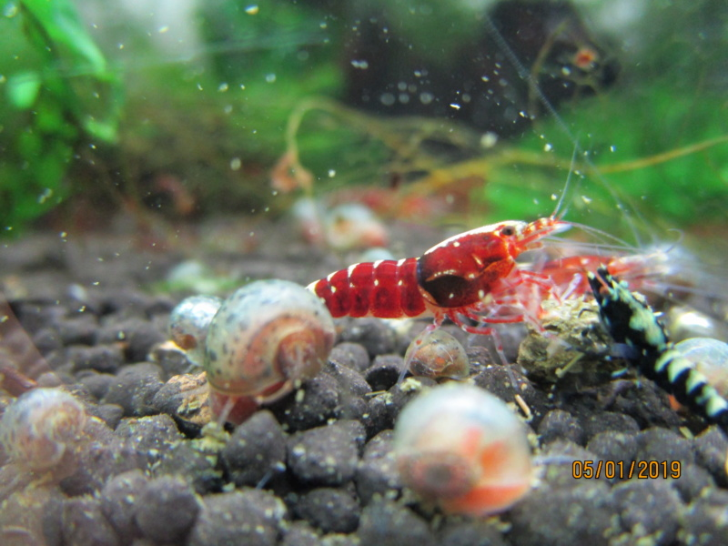 Recueil de photo aquariophiles de qualités Img_5443