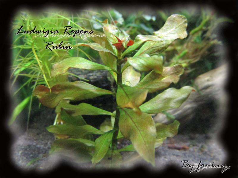 fouiny inventaire photo de mes plantes. Ludwig10