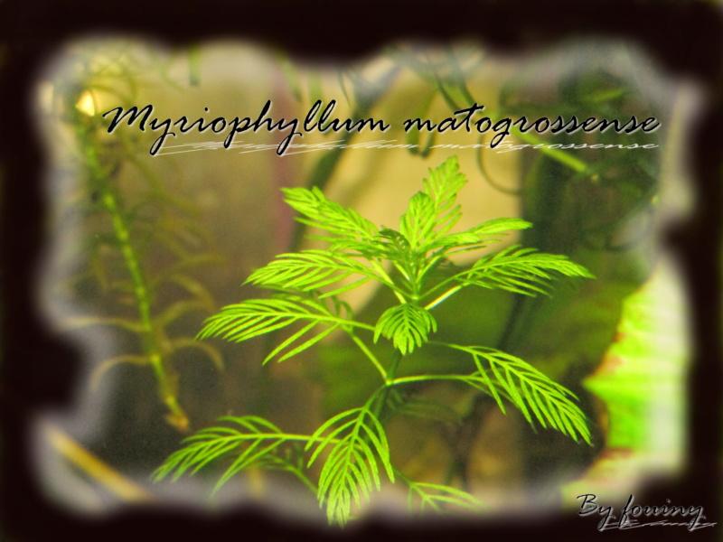fouiny inventaire photo de mes plantes. Myriop10