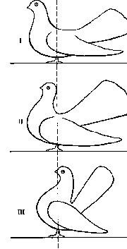 О статных голубях 112