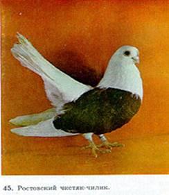 Цветнобокие статные голуби 114