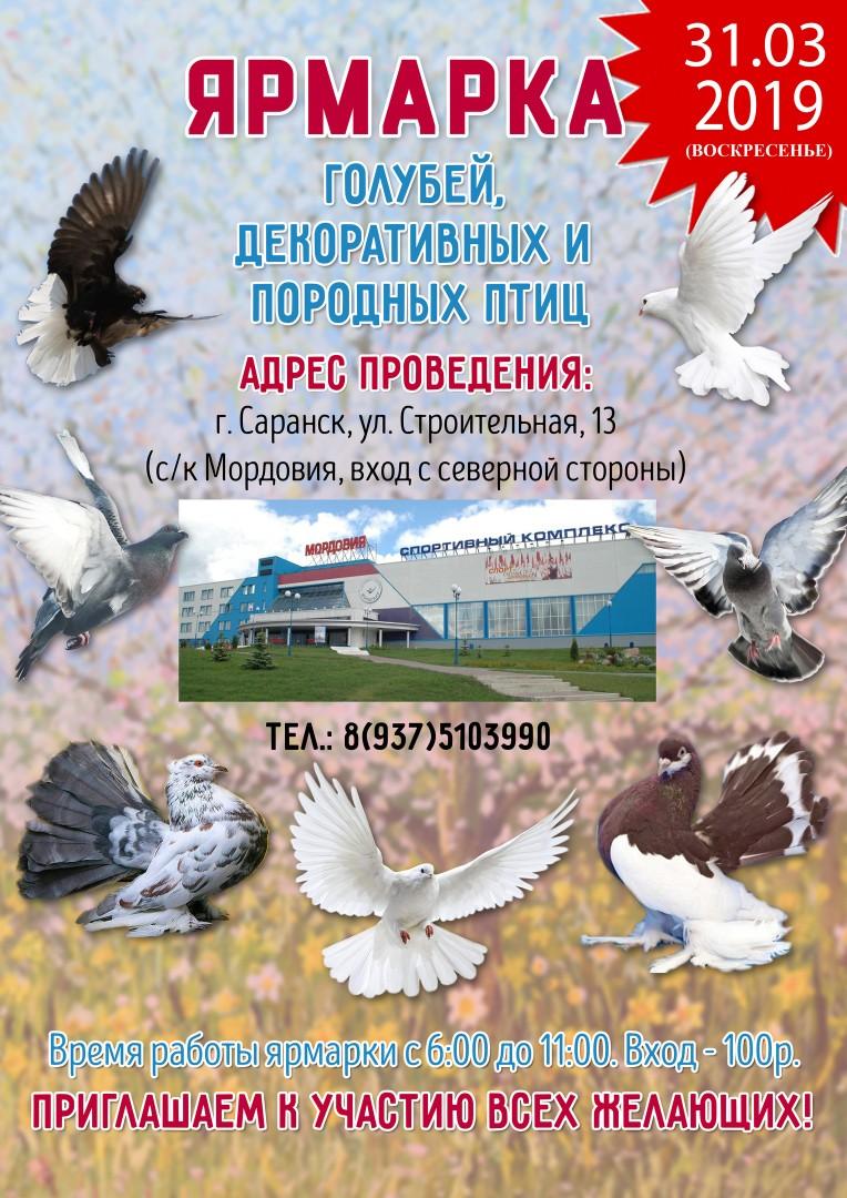 Выставка голубей в Саранске 2019 126