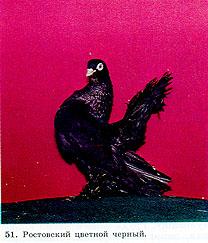 Одноцветные статные голуби 215