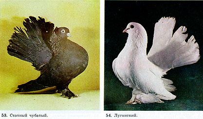 Одноцветные статные голуби 414