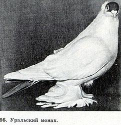 ГОННЫЕ ГОЛУБИ 415