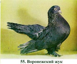 Одноцветные статные голуби 514