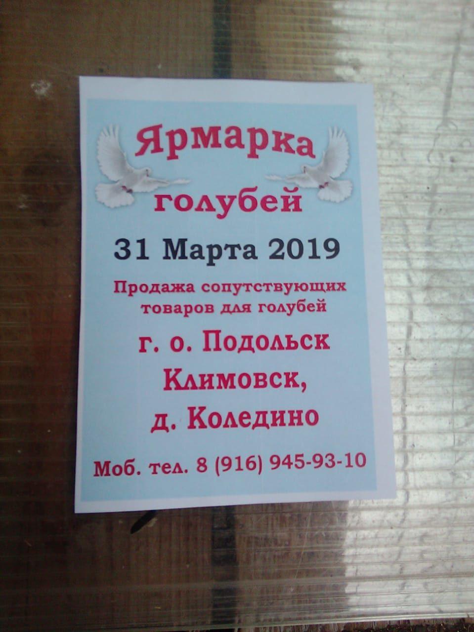 ВЫСТАВКИ ГОЛУБЕЙ В Москве в 2019 году 9c10