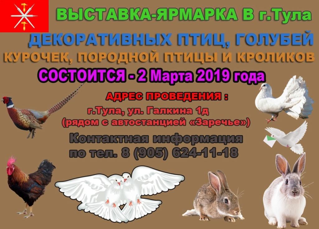 голубей - ВЫСТАВКА ГОЛУБЕЙ В ТУЛЕ 2 Марта 2019 года J2fjk-10