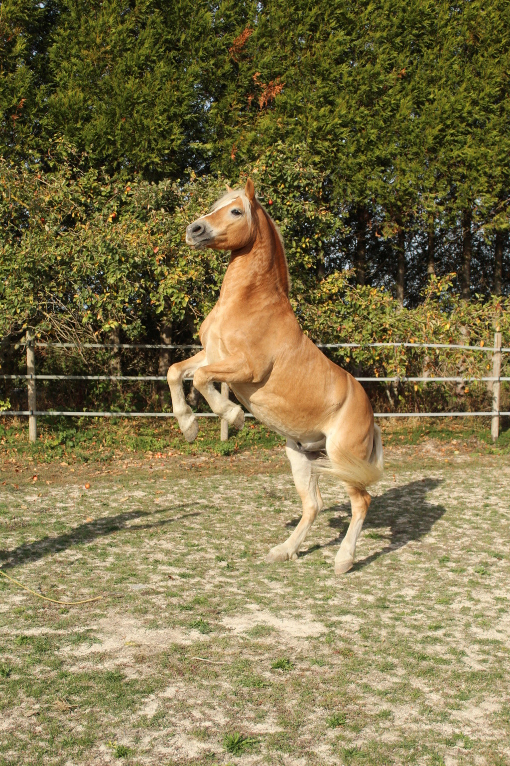 suite  cheval Img_1611
