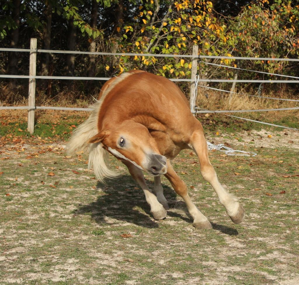 chevaux au travail Img_1612