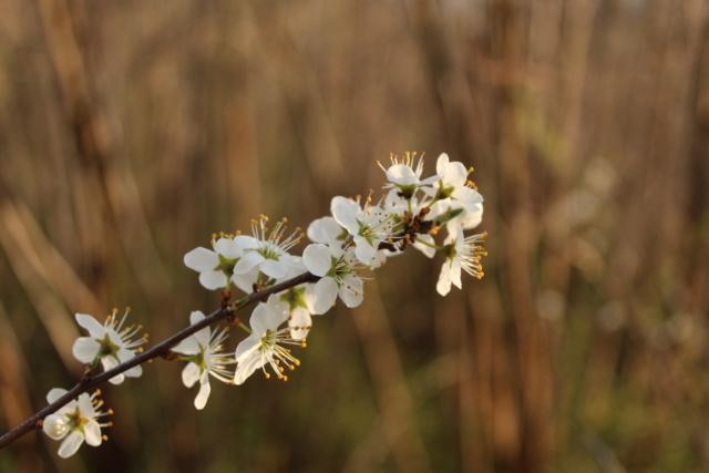 le printemps est là Img_8910