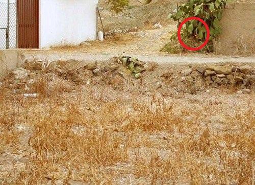 Trova il micio Gatto_10