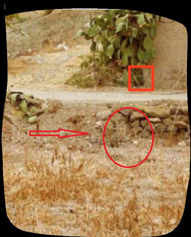 Trova il micio Gatto_12
