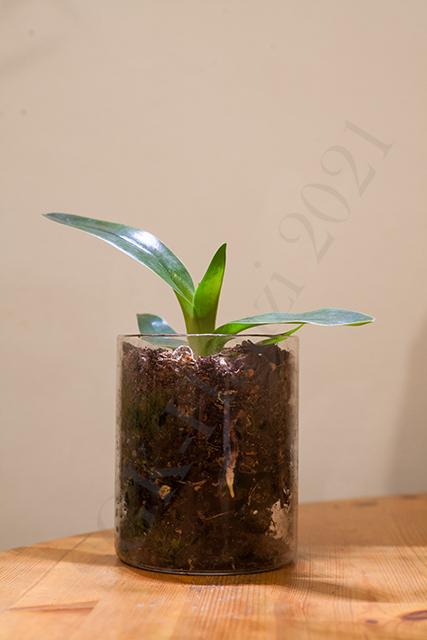 Orchideen-Neuzugang 2 - Seite 32 Gesamt12