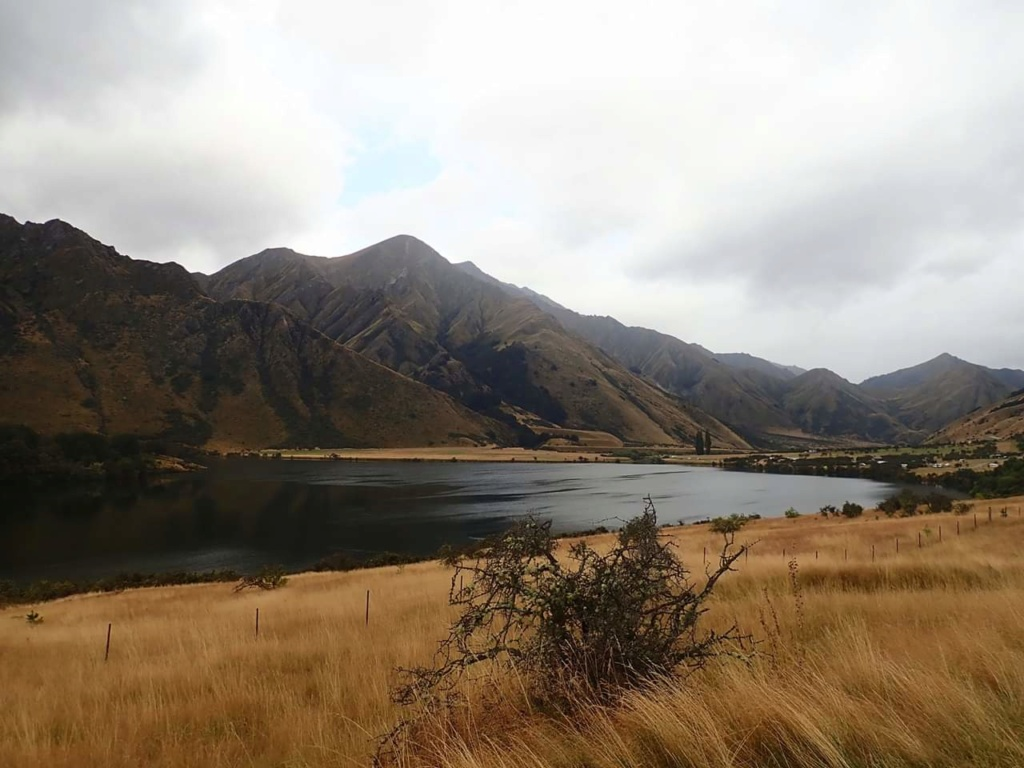 Nouvelle Zélande - Page 2 15514115