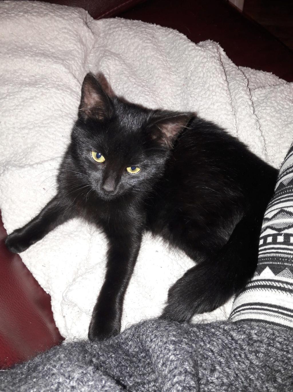 Oup's, femelle type européenne noire, née en septembre 2018 46104910