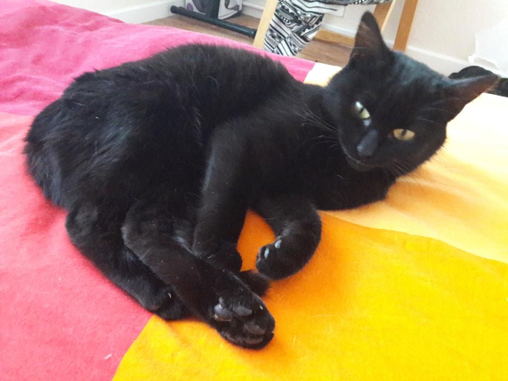 Ouby, femelle type européenne noir, née 1er mai 2018 46240410