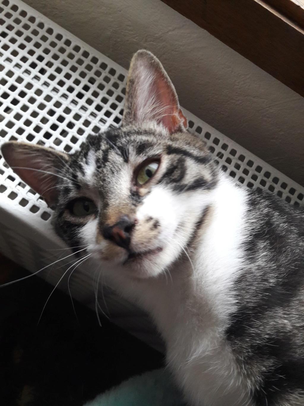 Pinpin, mâle type européen tigré et blanc né 1er juillet 2018 56173111
