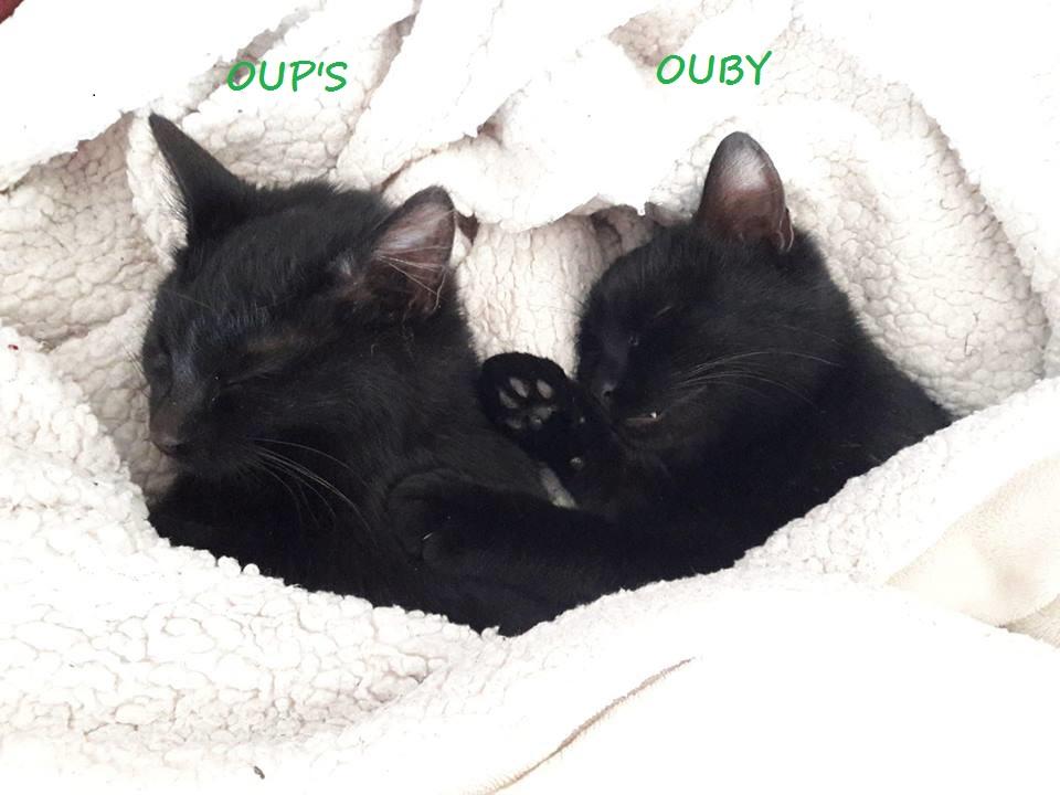 Ouby, femelle type européenne noir, née 1er mai 2018 Oups_e12