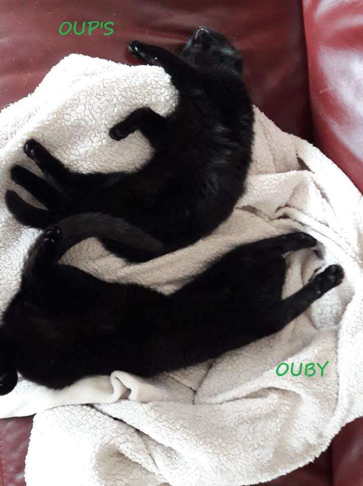 Oup's, femelle type européenne noire, née en septembre 2018 Oups_e13