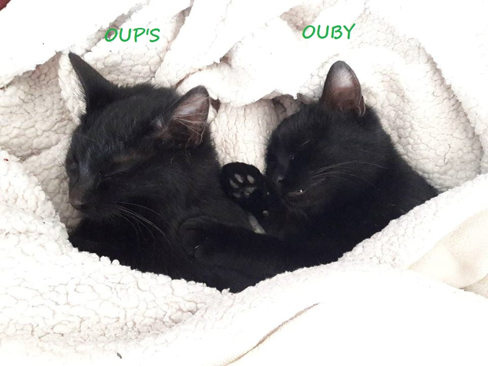 Oup's, femelle type européenne noire, née en septembre 2018 Oups_e14