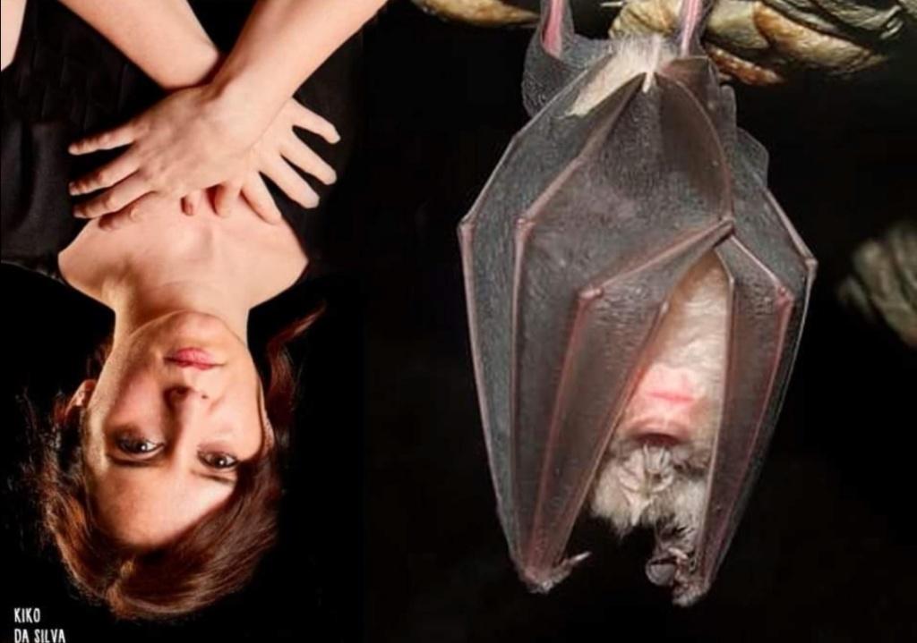 ¡Vaya día que llevo!. Se me ha metido un murciélago en casa - Página 7 Screen15