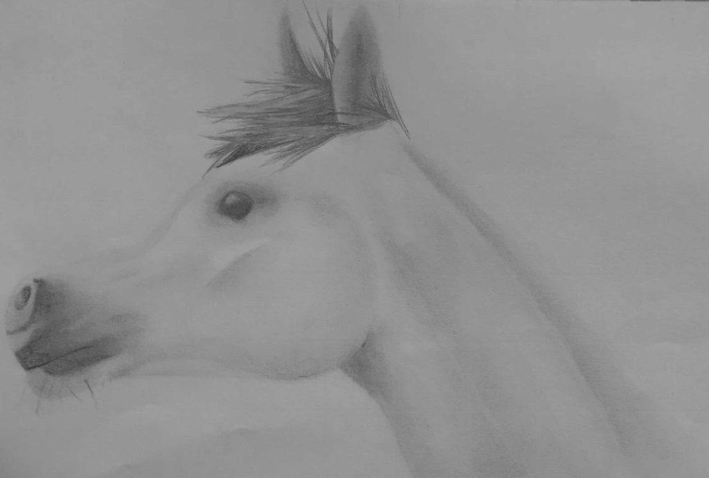 Iceys drawings... New_ca13
