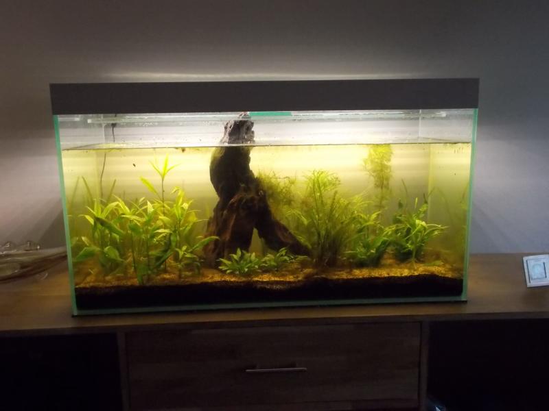 Jungle et labyrinthe Dscn9712