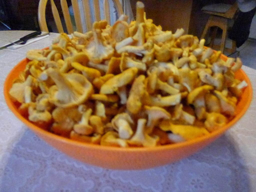 Les champignons... c'est commencé P1040810