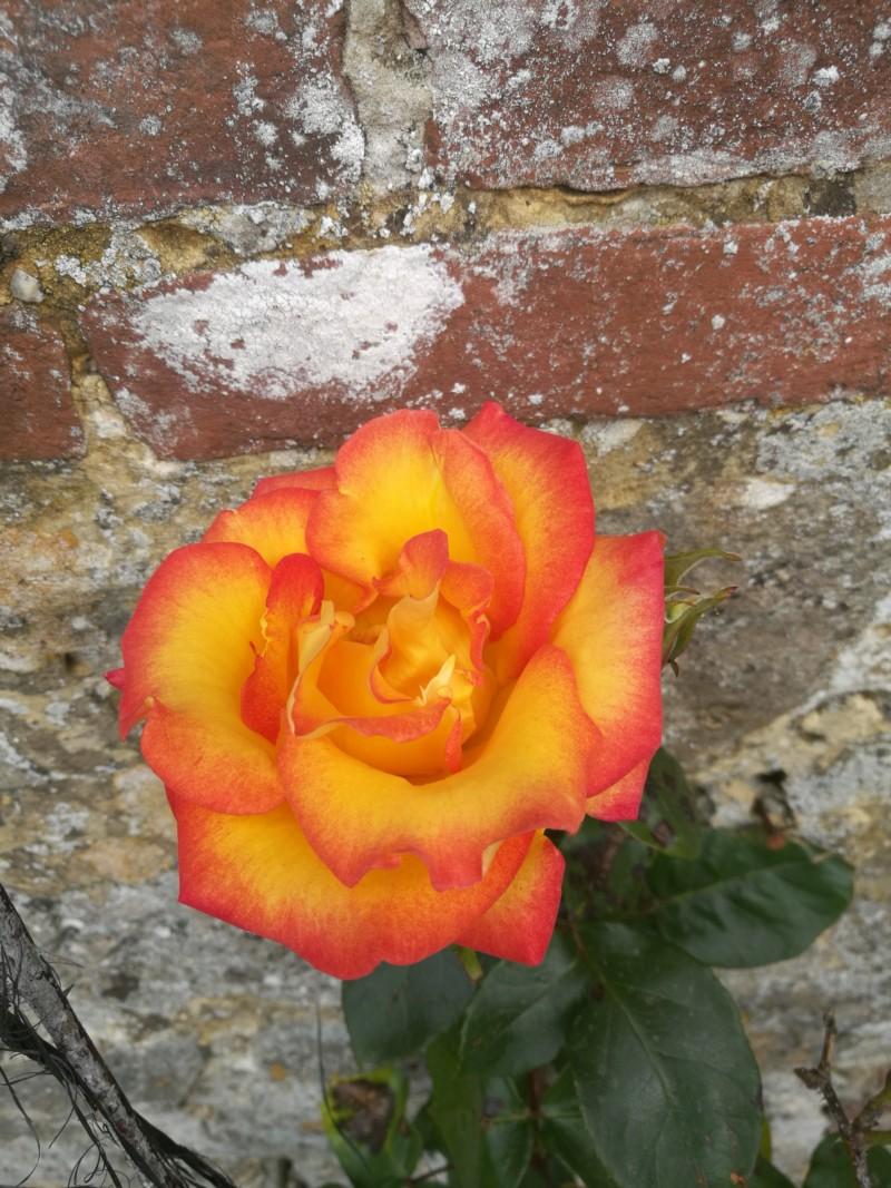 La couleur des roses... 20190617