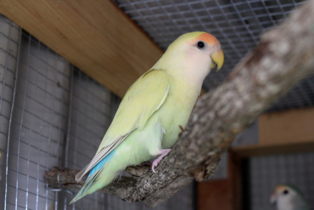 Tis Basically Bird World Img_8812