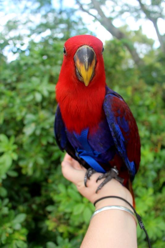 Tis Basically Bird World Img_8911