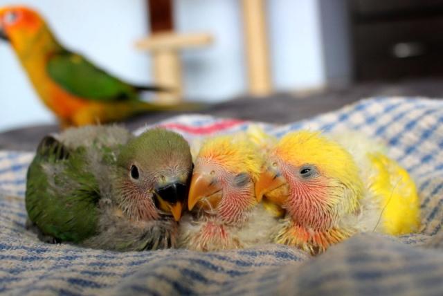 Tis Basically Bird World Img_8912