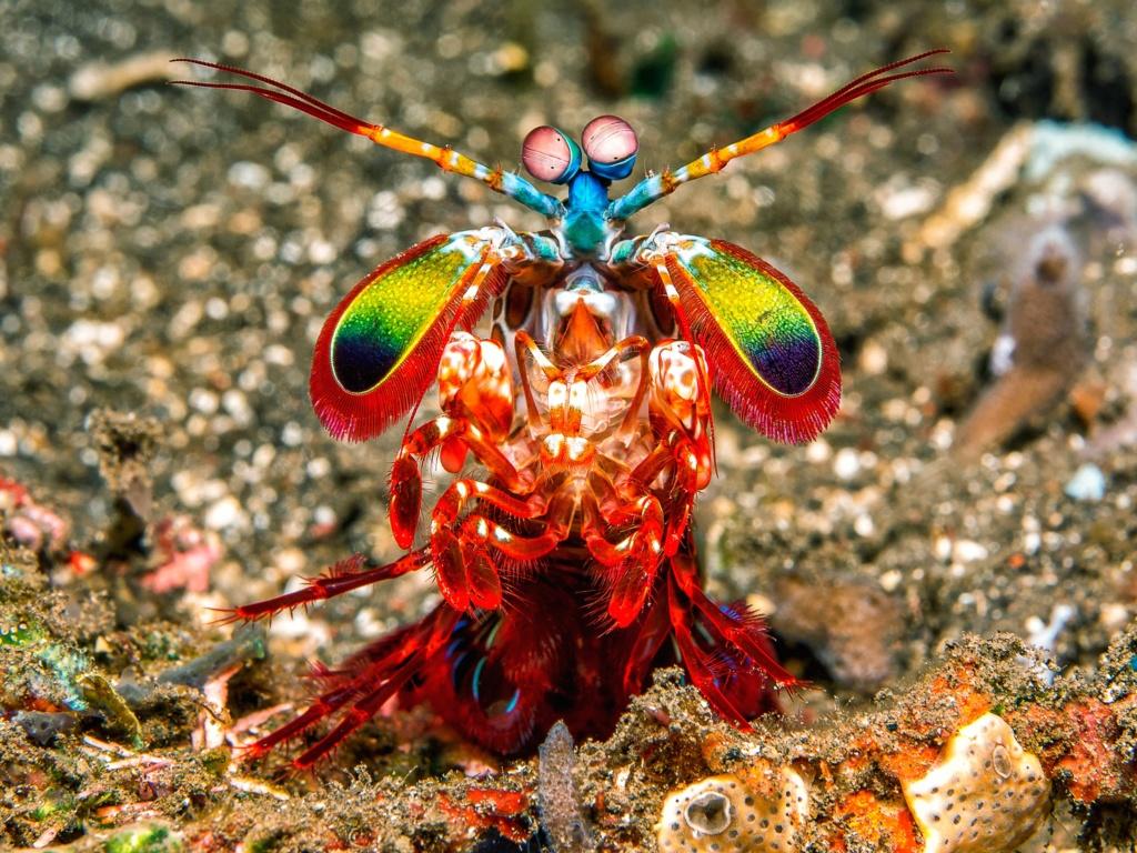 [Jeu] Association d'images - Page 16 Mantis10