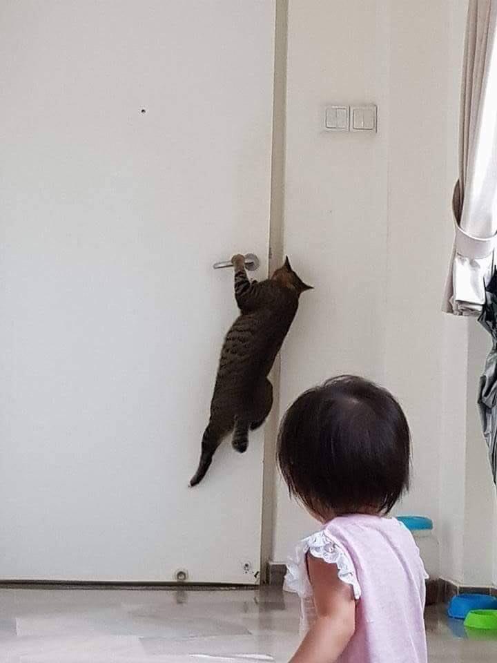 發現小孩沒辦法後,貓跳起來幫忙了~ 41934010