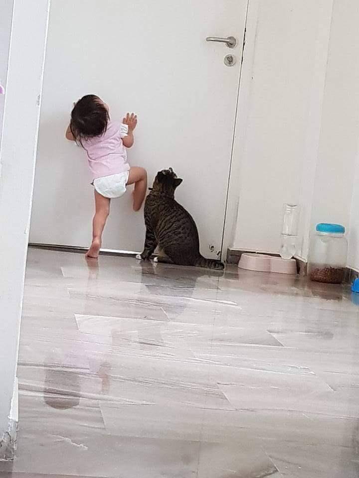 發現小孩沒辦法後,貓跳起來幫忙了~ 42084610