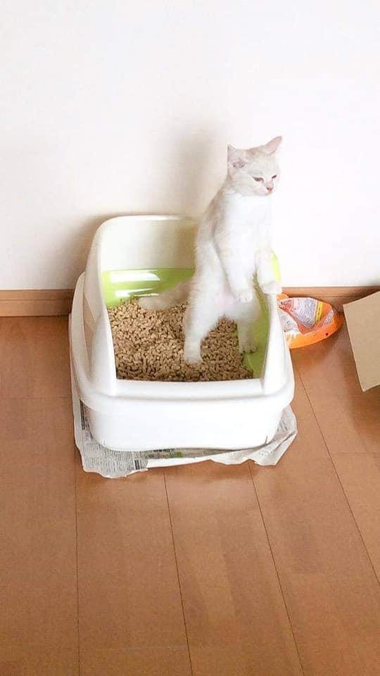 坐、站立的貓咪合集 45517210