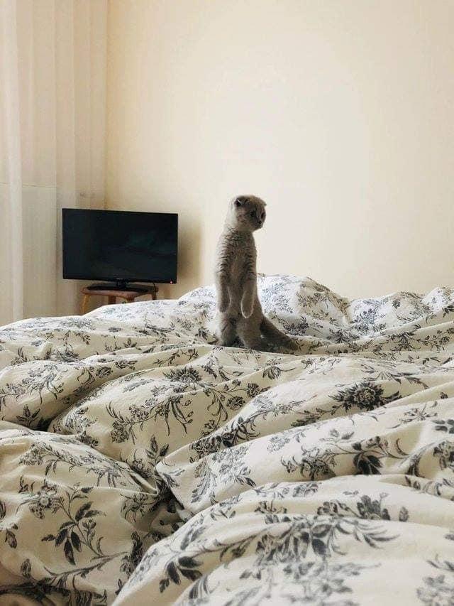 坐、站立的貓咪合集 45596910