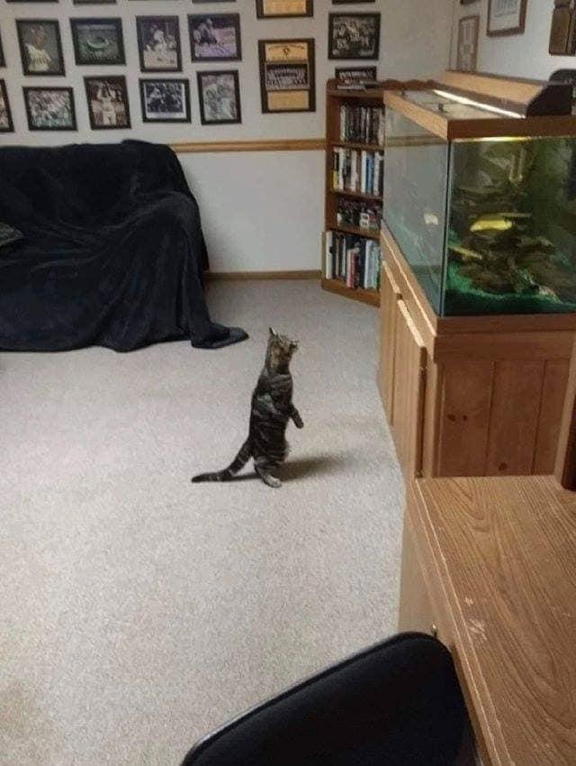 坐、站立的貓咪合集 45678110