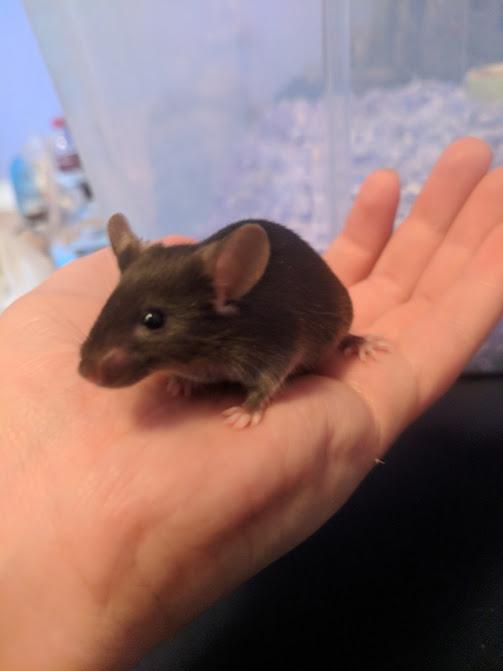 My Mouse Dossier 1peebe10
