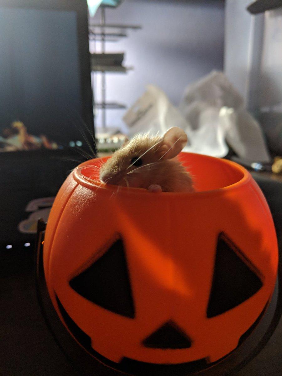 Pumpkin Pie  Pumpki10