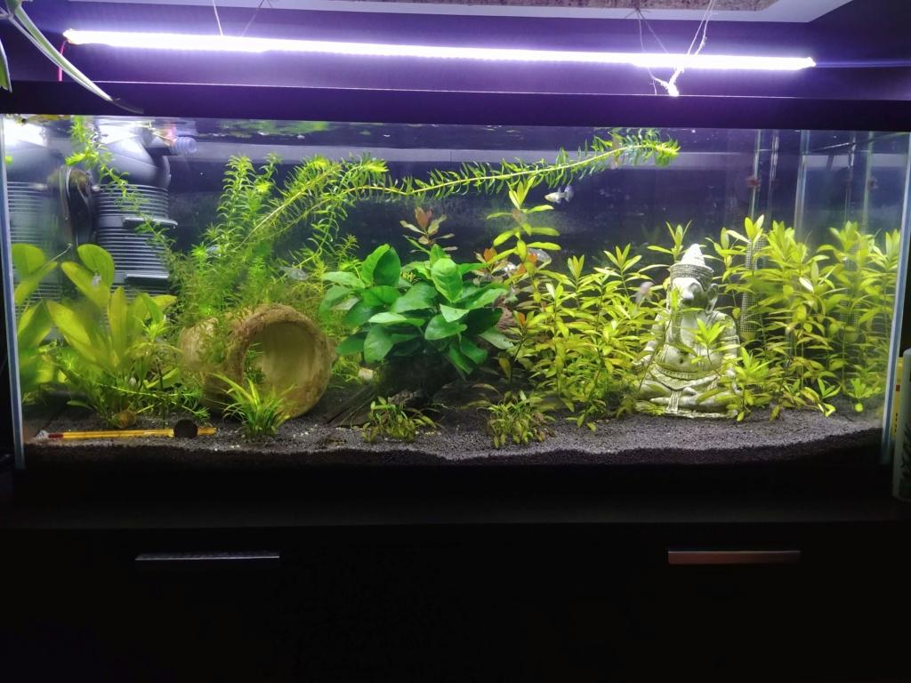 plantes qui deviennent jaunes et algues sur vitre 20181010